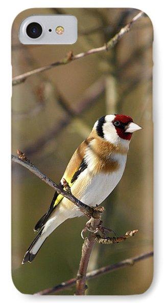European Goldfinch 2 IPhone Case by Jouko Lehto