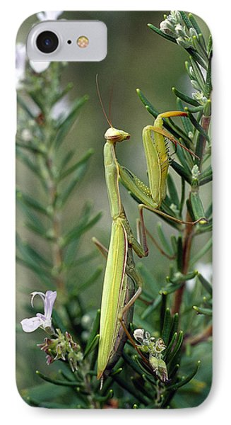 European Mantid Mantis Religiosa IPhone Case by Konrad Wothe