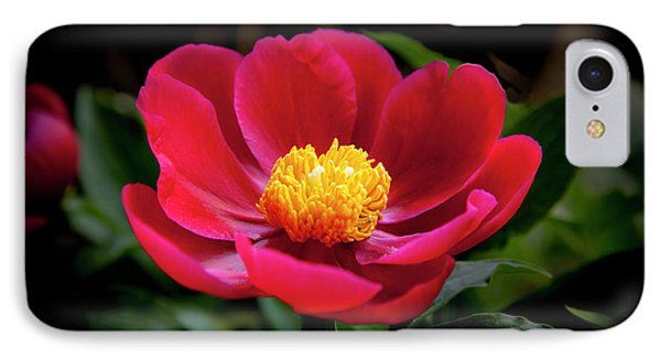 IPhone Case featuring the photograph Evening Peony by Charles Harden