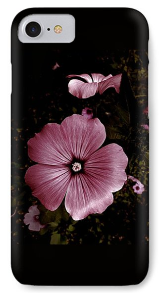 Evening Rose Mallow IPhone Case by Danielle R T Haney
