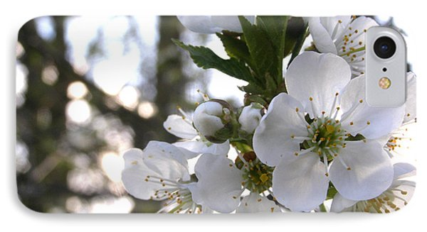 IPhone Case featuring the photograph Evening Show - Cherry Blossoms by Angie Rea