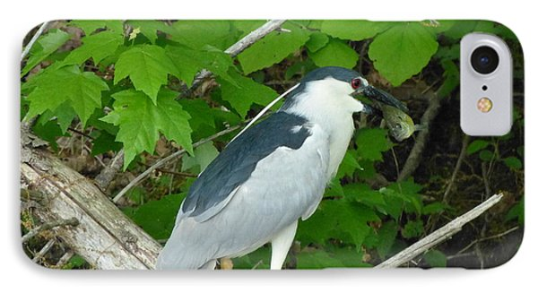 IPhone Case featuring the photograph Evening Snack For A Night Heron by Donald C Morgan