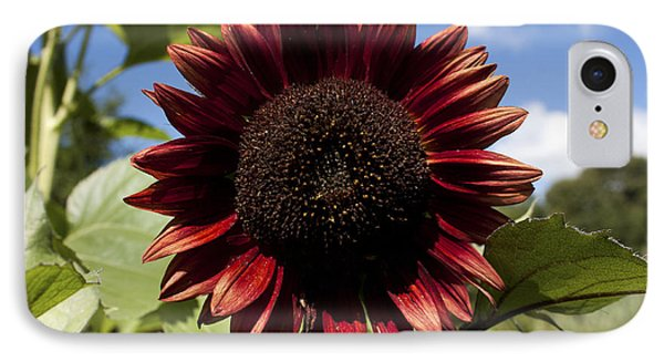 IPhone Case featuring the photograph Evening Sun Sunflower #2 by Jeff Severson