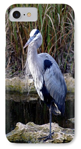 Everglades Heron Phone Case by Marty Koch