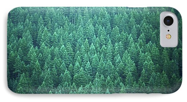 Evergreen IPhone Case by Laurie Stewart