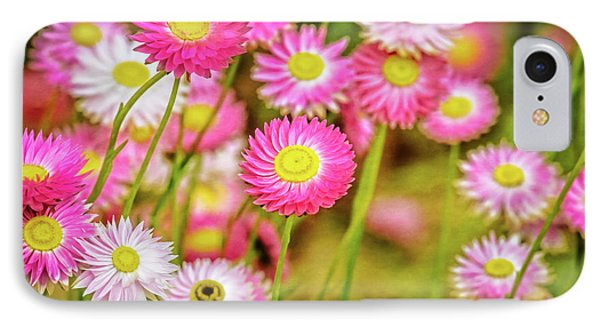 Everlasting Daisies, Kings Park IPhone Case by Dave Catley