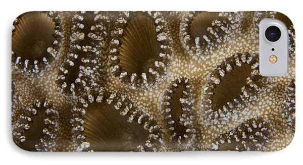 Extreme Close-up Of A Crust Anemone Phone Case by Terry Moore