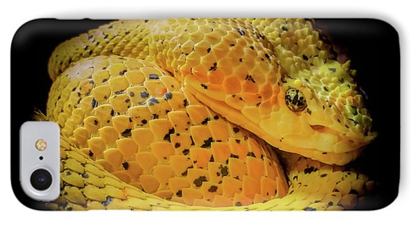 IPhone Case featuring the photograph Eyelash Viper by Karen Wiles