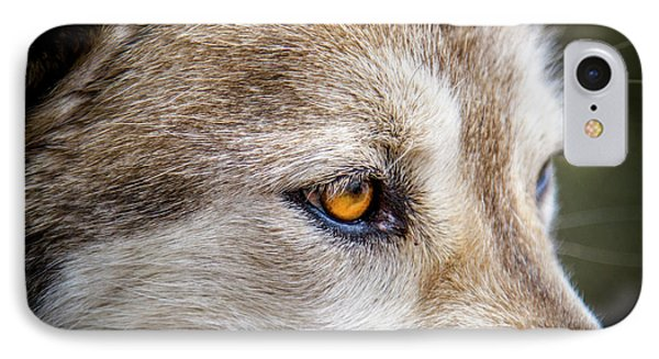 IPhone Case featuring the photograph Eyes Of The Gray Wolf by Teri Virbickis