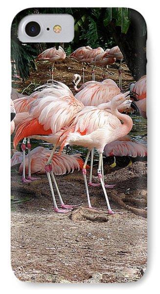 Fabulous Flamingos IPhone Case