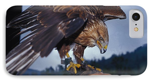 Falcon IPhone Case by Carl Purcell