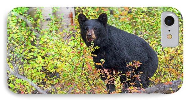 Fall Bear IPhone Case