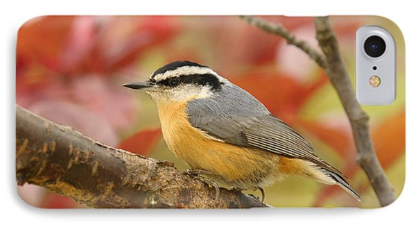 Fall Colors Nuthatch IPhone Case