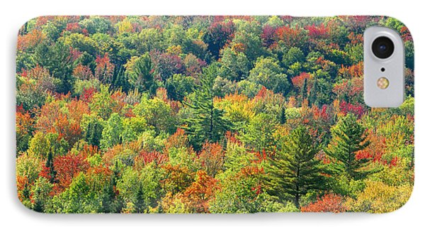 Fall Forest Phone Case by David Lee Thompson