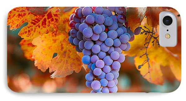 Fall Grapes From The Yakima Valley,  IPhone Case by Lynn Hopwood