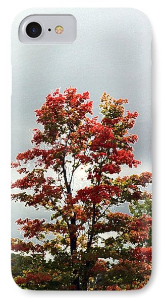 IPhone Case featuring the photograph Fall In Michigan Tree by Ellen Barron O'Reilly