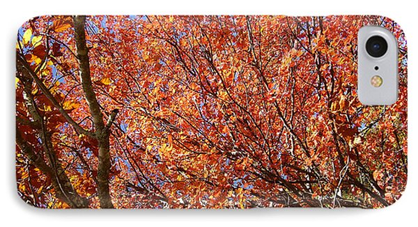 Fall In The Blue Ridge Mountains IPhone Case by Flavia Westerwelle