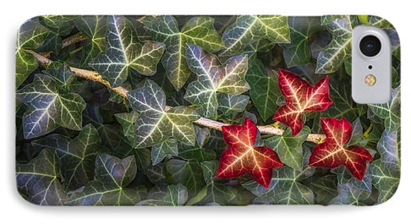 IPhone 7 Case featuring the photograph Fall Ivy Leaves by Adam Romanowicz