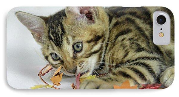 Fall Kitten IPhone Case by Shoal Hollingsworth
