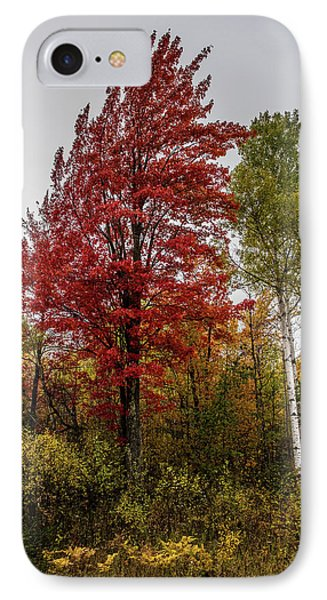 IPhone Case featuring the photograph Fall Maple by Paul Freidlund