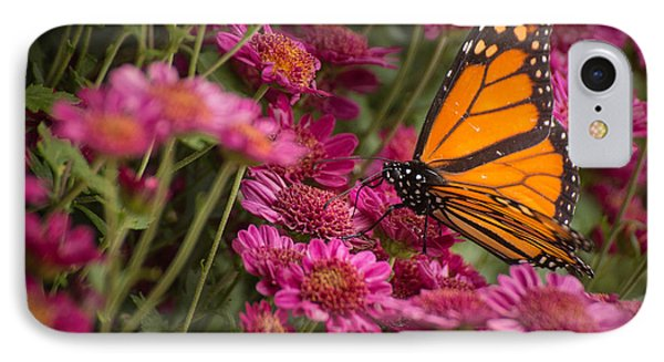 IPhone Case featuring the photograph Fall Monarch  by Julie Andel
