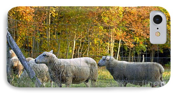 Fall Sheep IPhone Case by Christopher Mace