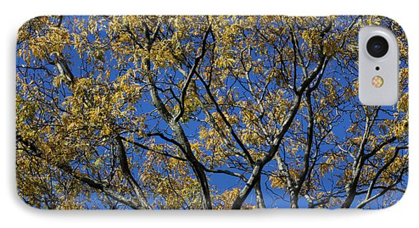 IPhone Case featuring the photograph Fall Splendor And Glory by Deborah  Crew-Johnson