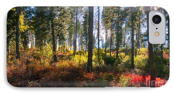 Fall Sun Glow II IPhone Case by Robert Bales