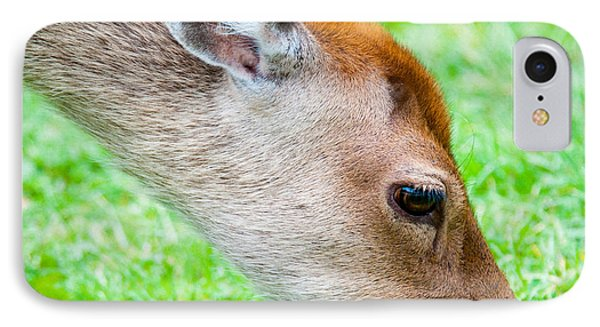 Fallow Deer Grazing British Fallow Deer Grazing On Grass In The New Forest Dorset Phone Case by Andy Smy
