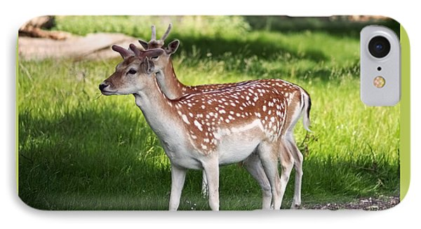 Fallow Deer In Richmond Park IPhone Case by Rona Black