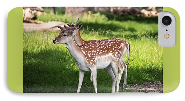 Fallow Deer In Richmond Park IPhone Case