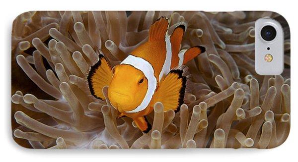 False Clownfish Phone Case by Steve Rosenberg - Printscapes