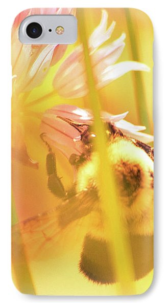 Fame Is A Bee IPhone Case by Bob Orsillo