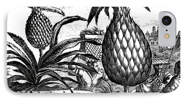 Farming Large Pineapples, Illustration From A Description Of Embassies To China, 1690  IPhone Case