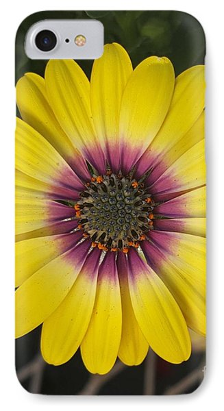 Fascinating Yellow Flower IPhone Case