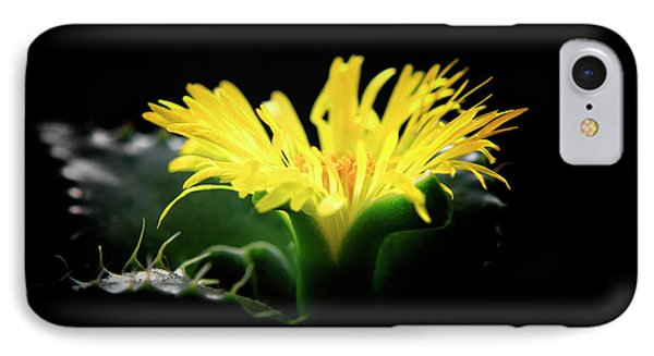 Faucaria Tigerina Tiger's Jaw IPhone Case by Charline Xia