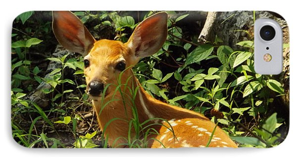 Fawn In The Woods 2 IPhone Case