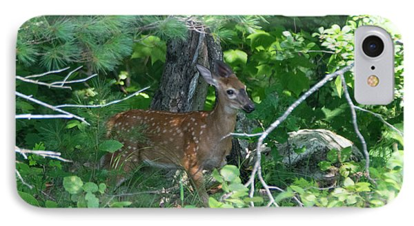 Fawn In The Woods IPhone Case by Jan Mulherin