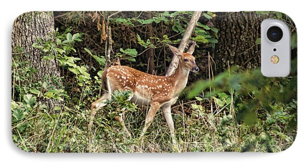 Fawn In The Woods IPhone Case by Rick Friedle