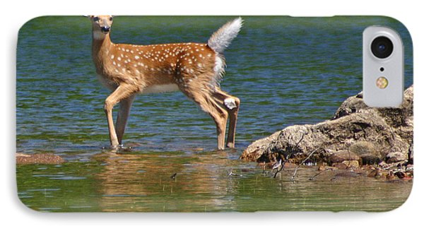 Fawn In Water IPhone Case by Brook Burling