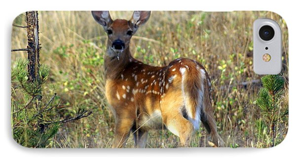 Fawn Phone Case by Marty Koch