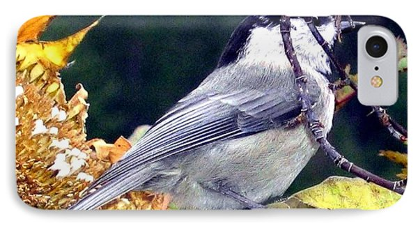 Feast For A Chickadee Phone Case by Will Borden