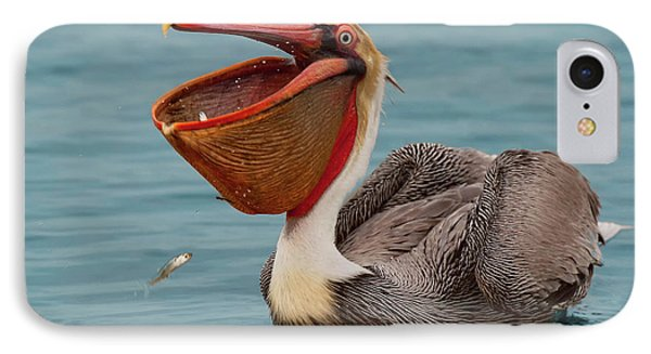 IPhone Case featuring the photograph Feasting Brown Pelican  by Ram Vasudev