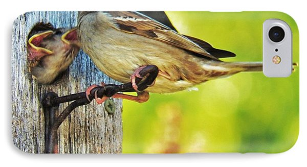 Feeding Baby Sparrows 1 IPhone Case by Judy Via-Wolff