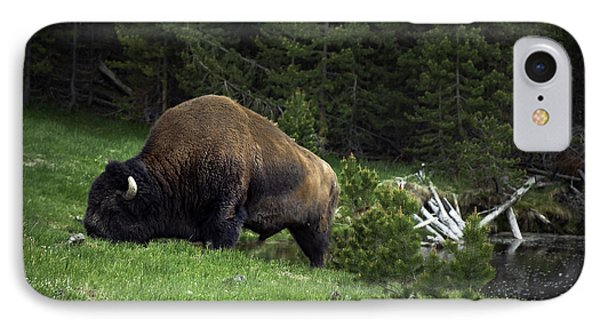 IPhone Case featuring the photograph Feeding Buffalo by Jason Moynihan