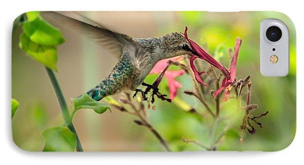 Feeding Hummingbird IPhone Case by Robert Bales