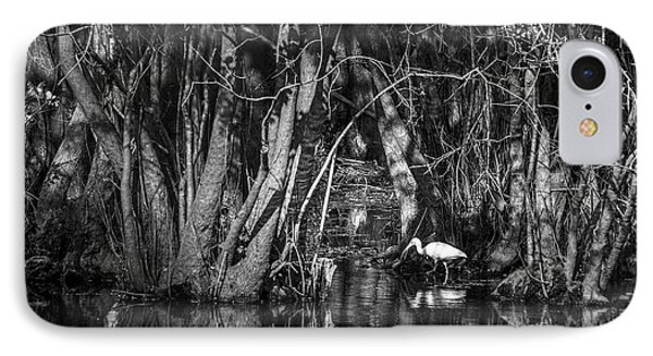 Ibis iPhone 7 Case - Feeding Time by Marvin Spates