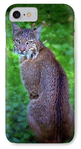 Female Bobcat IPhone Case by Mark Andrew Thomas