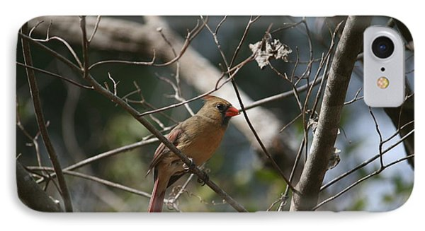 Female Cardinal 3 IPhone Case by Cathy Harper