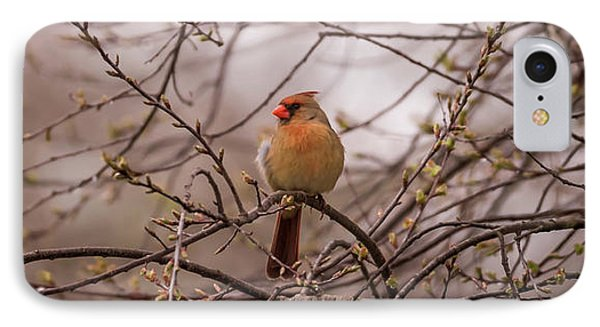IPhone Case featuring the photograph Female Cardinal In Spring 2017 by Terry DeLuco